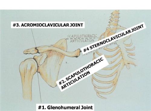 shoulder-complex-(web)