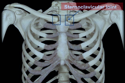 sternoclavicular-joint1