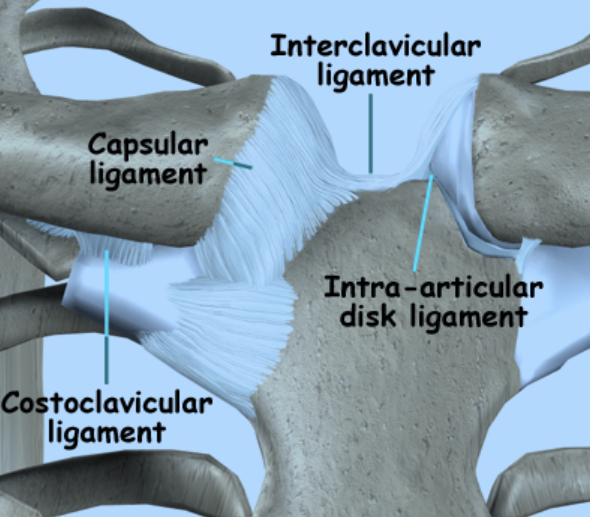 sternoclavicular-joint4